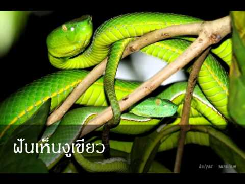 ฝันเห็นงูเขียว หมายถึงอะไร (เลขเด็ด)