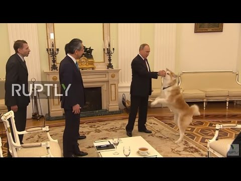 Russia: Down boy! Putin's security dog startles Japanese media