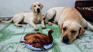Thử thách Kim Chi Củ Cải trông vịt quay và cái kết bất ngờ | I left my dogs Alone with roasted duck thumbnail