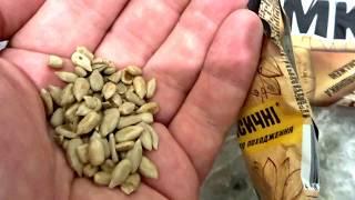 Что будет если покупать очищенные жаренные семечки