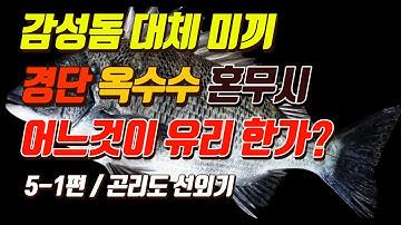 [박과장TV] 5-1편 감성돔 대체 미끼 뭘로 써야하나?? 옥수수 경단 혼무시 참갯지렁이