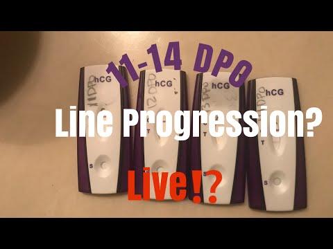 LIVE PREGNANCY TEST   11-14 DPO Line Progression