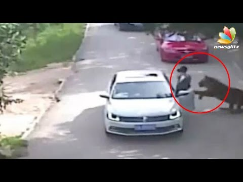 Woman killed by Tiger in China Zoo | Animal Accidents Videos | Tamil World News