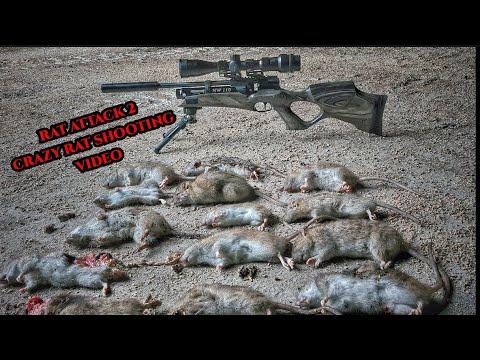 RAT SHOOTING AIRGUN