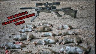 RAT SHOOTING AIRGUN HUNTING RAT INFESTATION PEST CONTROL HW110 22CAL  RATTING