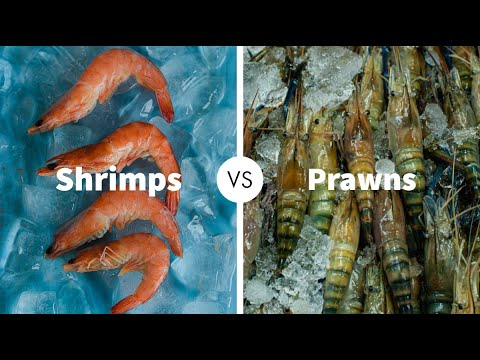 Difference Between Shrimps And Prawns|Shrimps&Prawns|ELEMENOPY