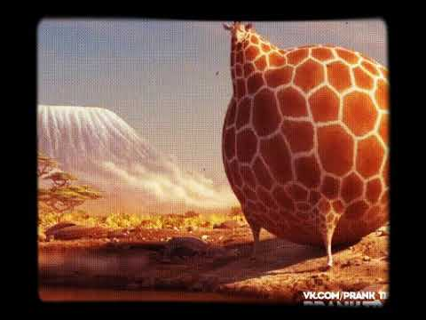 нужно гифка толстый жираф после нового года рассказать тебе