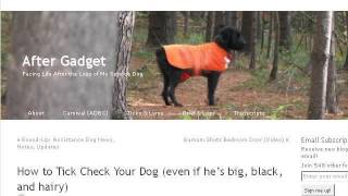 How-To Search Dog Names By Meaning