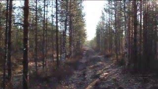 видео Охота на рябчика весной