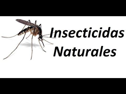5 Insecticidas naturales para los mosquitos