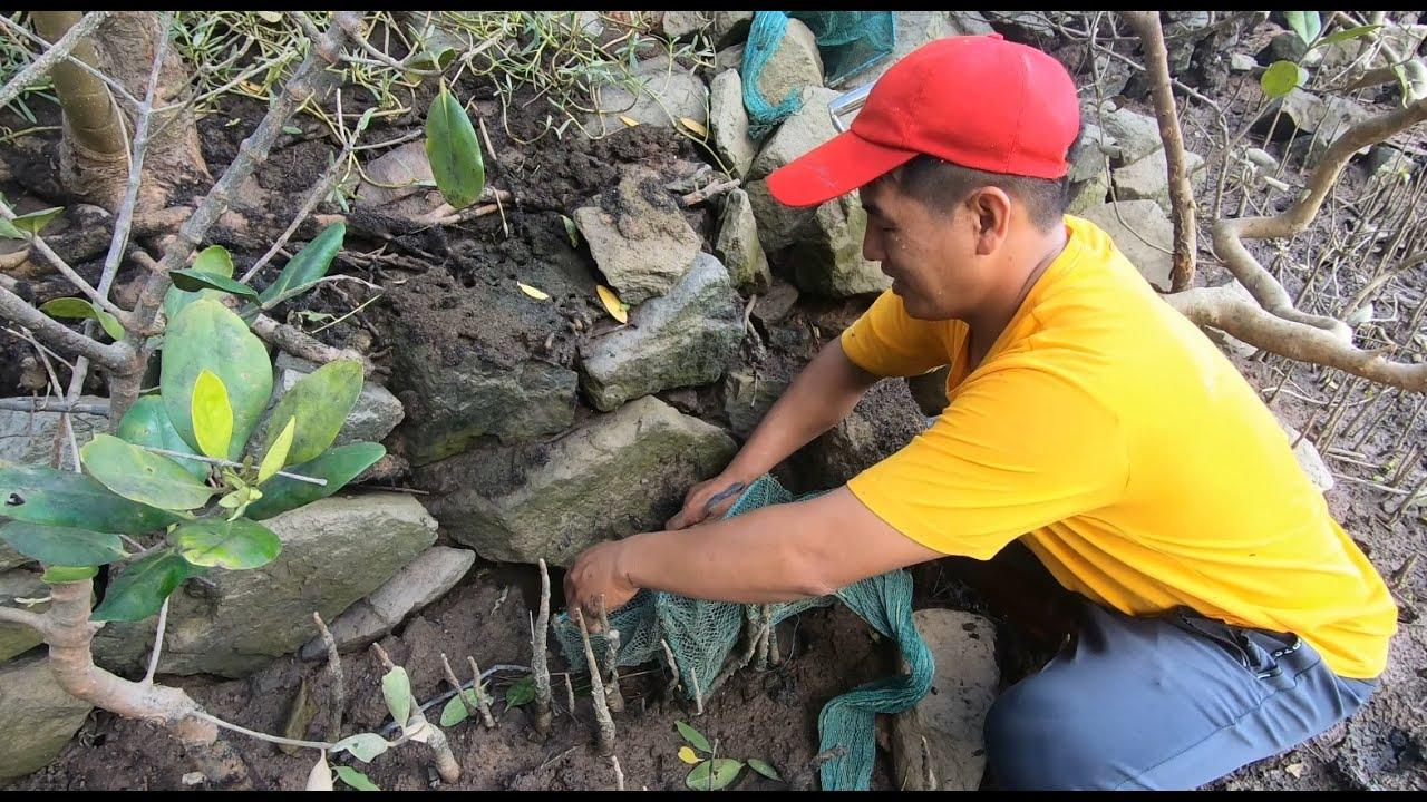 刀仔发现一片螃蟹洞挖不了,拿10条网笼堵住洞口,第二天全都是货