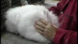 2010 NARBC National Angora Show, Dalton, Ga. Best In Show