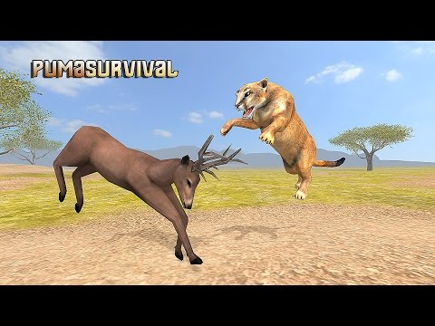 Puma Survival Simulator - Gameplay Android