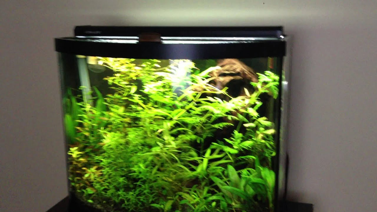 Fish aquarium with plants - 2 Beginner Aquarium Plants Great Hardy Species