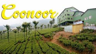 Coonoor Vlog | High Field Tea Factory, Sim's Park, Indian Bakery // #MagaliTravels