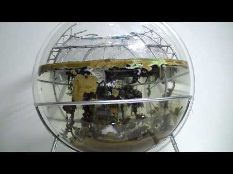 Experimental Globe l Speeds up process of 'rusting'