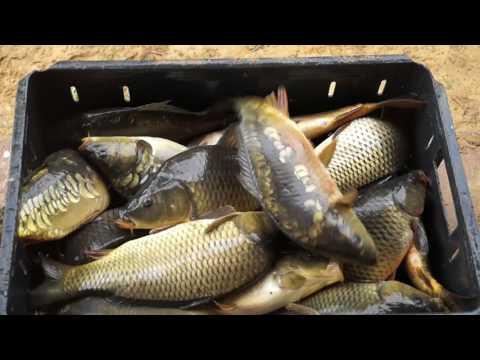 рыбалка в воронежской области ютуб