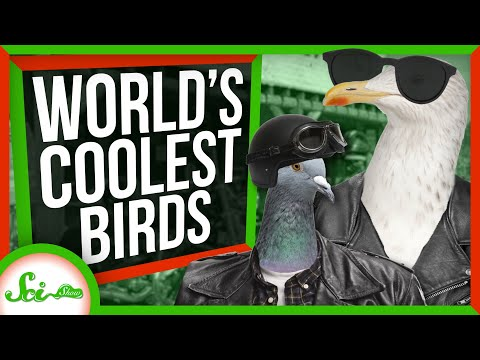 The Coolest Birds on Earth | A SciShow Compilation