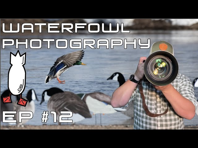 WATERFOWL PHOTOGRAPHY -  EP #12 Field Facts with Forrest
