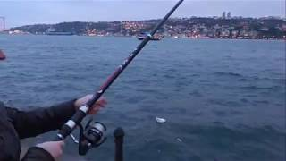 İstanbul Boğazı Çapariyle İstavrit Balık Avı