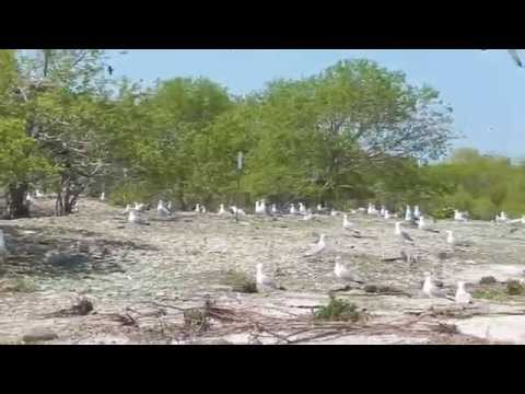 Little Charity Island Colonial Waterbird Survey - USFW - 5/28/15