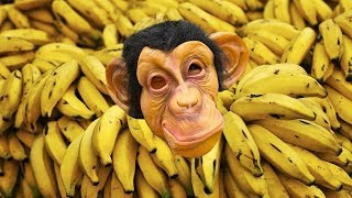 Monkey Bananas - Animal songs   Funny music for Kids & Nursery Rhymes