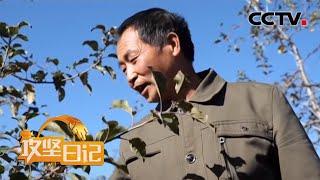 《攻坚日记》 20200608 筑梦生寅村(4)|CCTV农业