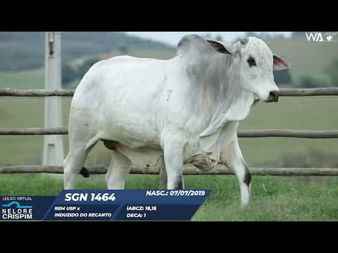 LOTE 17 SGN 1464