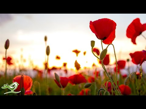 Beautiful Relaxing Music - Peaceful Flute Music, Meditation Music, Sleep Music