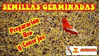 ALIMENTACION - EL GERMINADO DE SEMILLAS