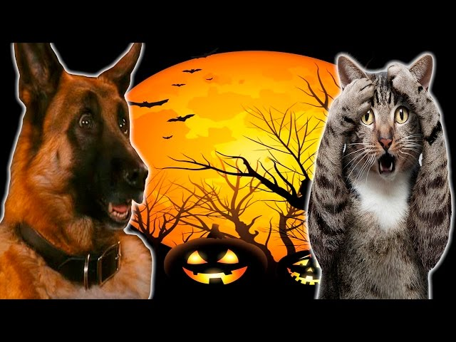 Funny Cats And Dogs Scared Of Halloween – Funny Cats And Dogs