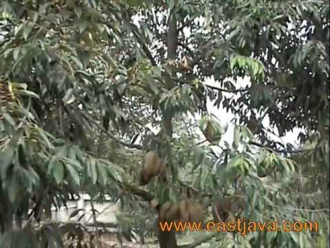 Bakti Alam AgroWisata - Pasuruan - East Java