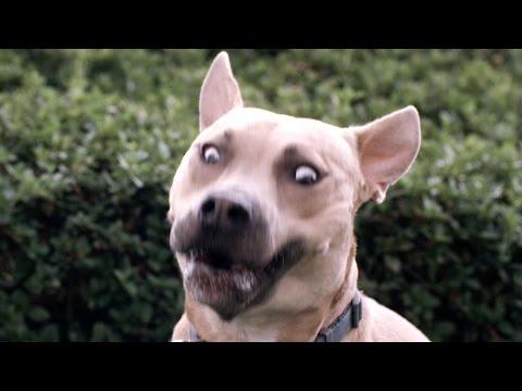 Dogs Catch Treats In Slow Motion