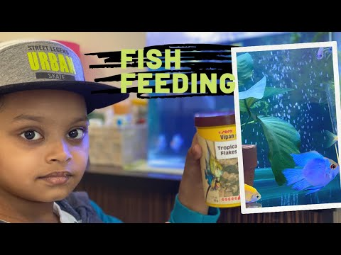 Feeding Fish / Aquarium Fish Feeding/ My Pet Feeding/hungry Fishes/happy Fishes