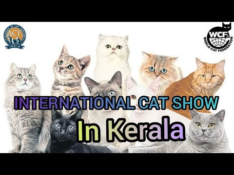 International cat show in kerala