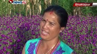 मखमली, सयपत्री गोदावरीको फूलले भक्तपुरका ग्रामीण भेग फूलमय-NEWS 24