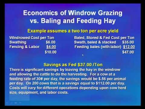 Windrow Grazing Economics Part 1