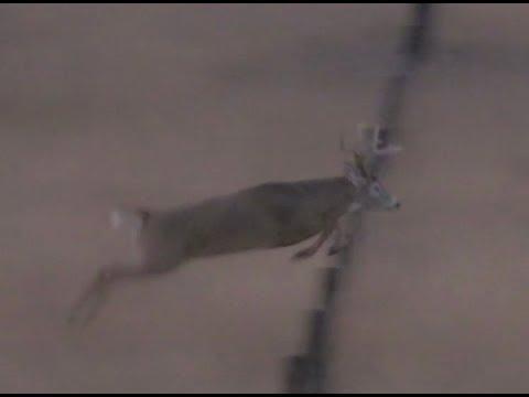 Pure Hunting Season 6 Episode 601, Nebraska Whitetail
