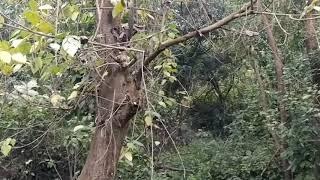 Rajaji National Park (Uttarakhand) Beauty| Rainy season| Best tourist place in world