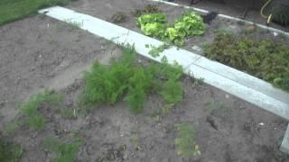 13# Da bin ich wieder  (Gartenrundgang mitte August)