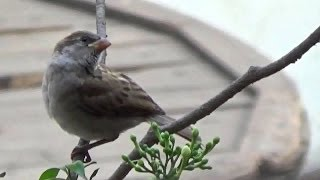 Sony HDR - CX240E Full HD Handycam Trial - Zooming & Birding