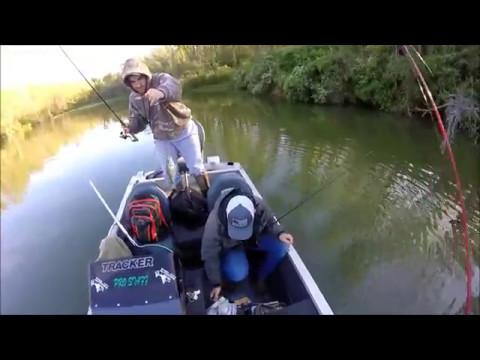 Cross Creek Spring 2017- GULP ALIVE MINNOW Action!!!!