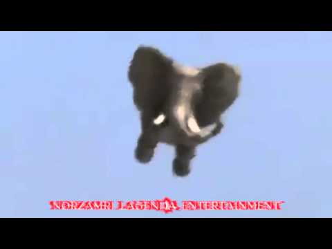 gajah terbang (flying elephant) - YouTubeGajah Terbang