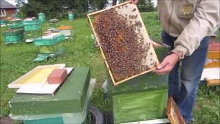 Будет ли  мёд  в этом году