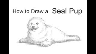How to draw a Seal Pup (Harp Seal)
