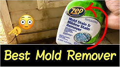 ✅Best Mold Remover? | How to Get Rid of Mold, Mildew, Black Mold on Walls, Tile, Ceiling (Part 1)