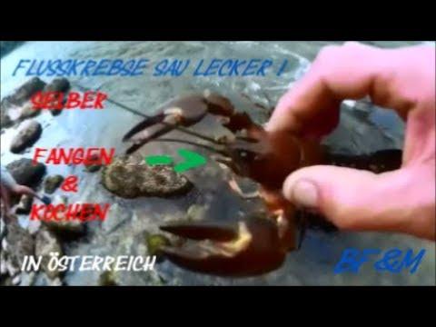 NEU! FlussKrebse aus der Traun(Österrreich) SELBST Fangen/Kochen/Essen SAU LECKER!!!