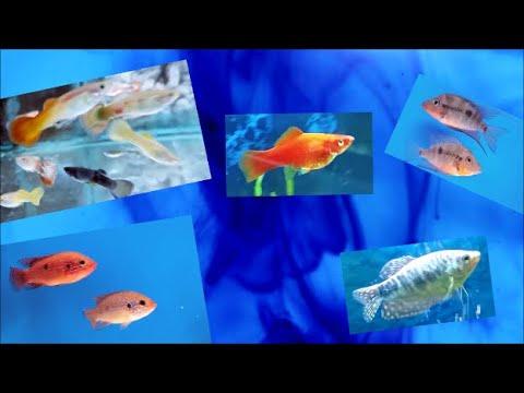Using Methylene Blue In Freshwater Fish Tank - Treating Aquarium Fish Disease With Medication