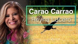 Carrao Carrao - Reyna Lucero (Letra) HD