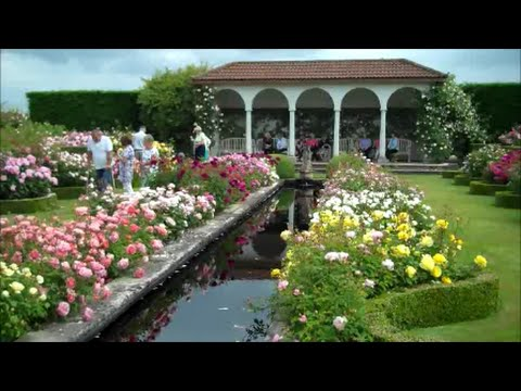 David Austin Rose Garden   YouTube